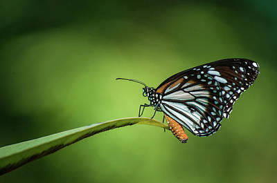 Photograph - Butterfly by Art At Its Best!