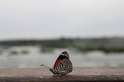 Insect Photograph - Butterfly At Iguazu Falls by Svetlana Zhukova