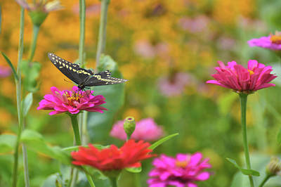 Photograph - Butterfly Bow Tie by JAMART Photography