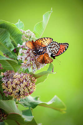 Photograph - Butterfly Buffet II by Jeff Phillippi