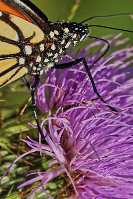 Photograph - Butterfly Closeup Vertical by Meta Gatschenberger