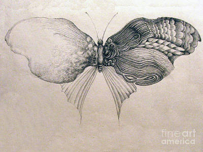 Drawing - Butterfly For Jeffrey by Rosanne Licciardi