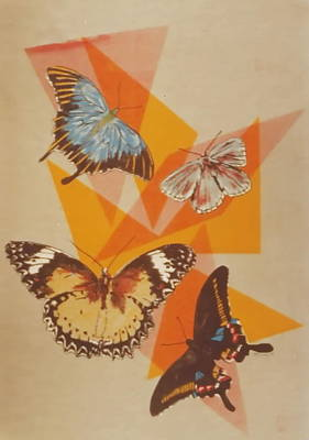 Drawing - Butterfly Fun by Barbara Keith