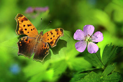 Photograph - Butterfly Garden by Christina Rollo
