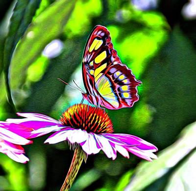 Photograph - Butterfly Glow by Karen Silvestri