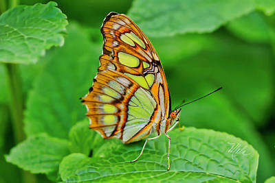 Photograph - Butterfly Leaf by Meta Gatschenberger