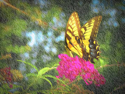Photograph - Butterfly Likeness  by Ches Black