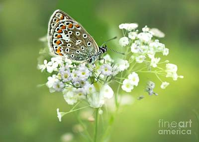 Mixed Media - Butterfly On Babybreath by Morag Bates