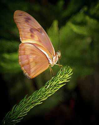 Photograph - Butterfly On Perch by Jean Noren