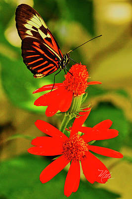 Photograph - Butterfly On Red Flower by Meta Gatschenberger
