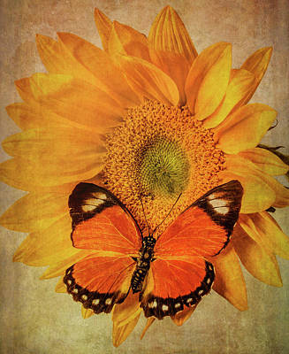 Photograph - Butterfly On Textured Sunflower by Garry Gay