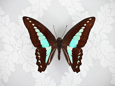 Photograph - Butterfly On Wallpaper Background by William Andrew