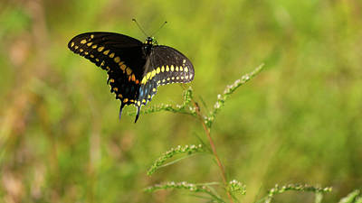 Photograph - Butterfly Perch Royal Palm Beach Pines Nature Area by Lawrence S Richardson Jr