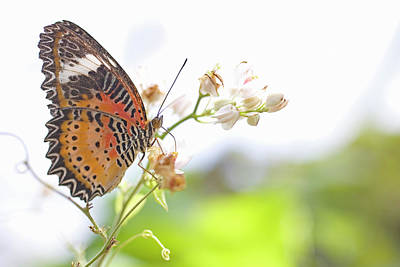 Photograph - Butterfly Perched On Stem Of Flower by Buena Vista Images