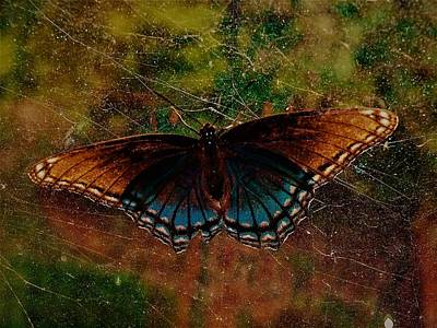 Photograph - Butterfly by Randy Sylvia