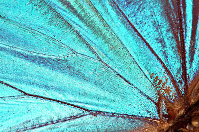 Insect Photograph - Butterfly Wing Background by Jodijacobson