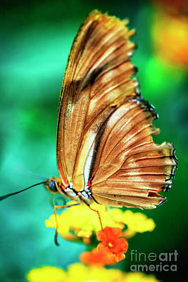Photograph - Butterfly Wing Colors by John Rizzuto