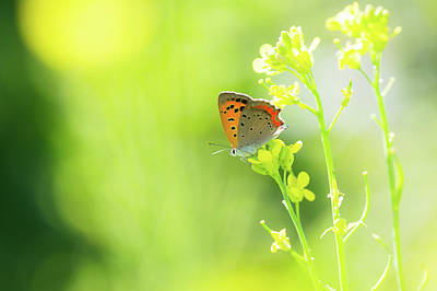Insect Photograph - Butterfly by Yuji Takahashi