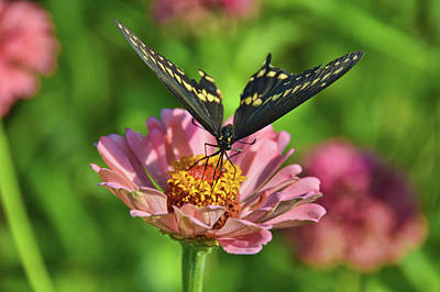 Photograph - Butterflying by JAMART Photography