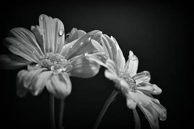 School Teaching - BW Chrysanthemums #164 by Noranne AG