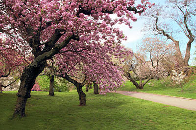 Photograph - The Cherry Tree Path by Jessica Jenney