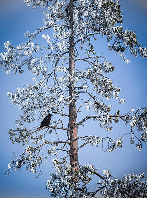 Photograph - Bye Bye Blackbird by Karen Wiles