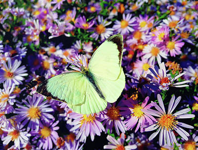 Mellow Yellow - Cabbage butterfly by PsychoShadow ART