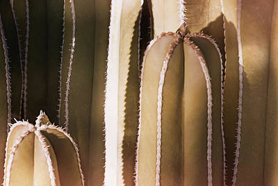 Photograph - Cacti Abstraction II by Leda Robertson