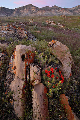 Gaugin - Cacti Blooms on Boulder in Book Cliffs by Ray Mathis