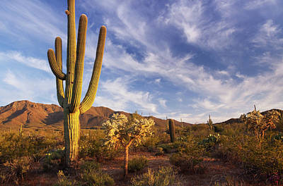 Photograph - Cactus And Desert Landscape With Bright by Kencanning