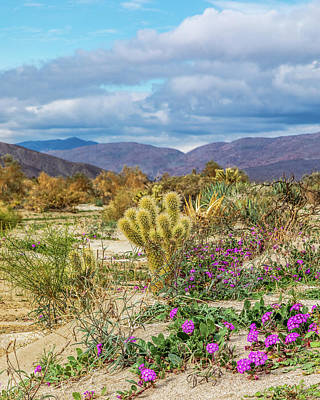 Photograph - Cactus And Sand Verbena by Peter Tellone