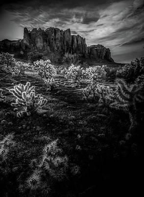 Cactus Fields Original