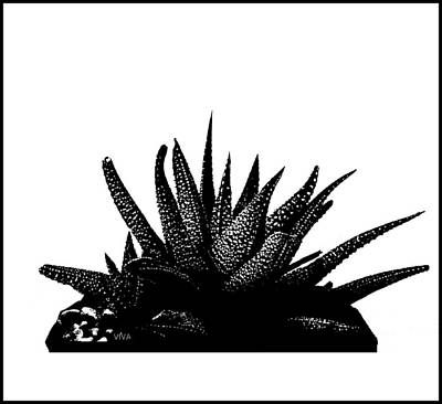 Photograph - Cactus Flower 1 - B-w by VIVA Anderson