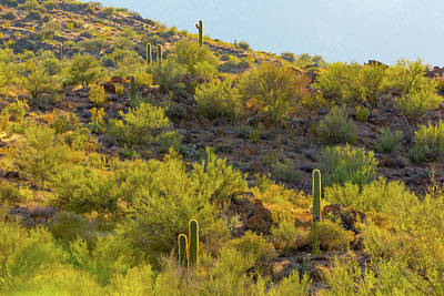Photograph - Cactus Halos by SR Green