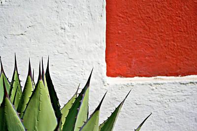 Photograph - Cactus by Mario A. De Leo Winkler (accrama)