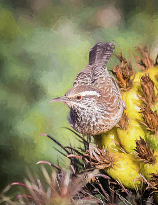 Photograph - Cactus Wren by James Capo