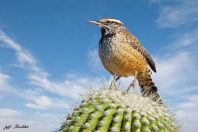 Photograph - Cactus Wren On A Saguaro Cactus by Jeff Goulden