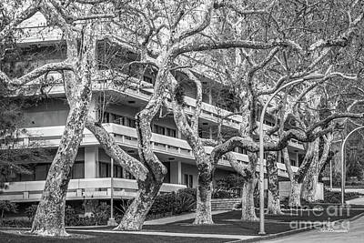 Photograph - Cal Poly Pomona Landscape by University Icons