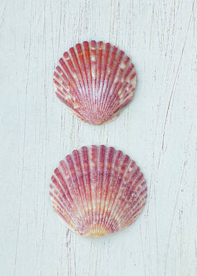 Photograph - Ornate Scallop Assembly   by Kathi Mirto