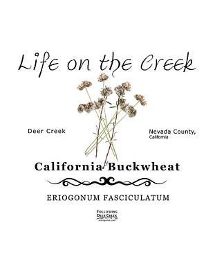 Digital Art - California Buckwheat by Lisa Redfern
