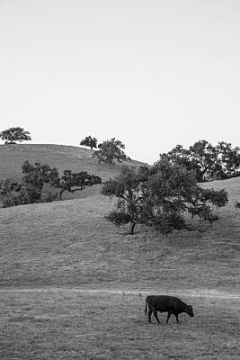Photograph - California Cattle And Trees  by John McGraw