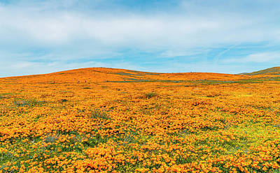 Photograph - California Poppies - 2019 #2 by Gene Parks
