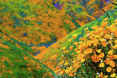 Royalty-Free and Rights-Managed Images - California Poppies by Brian Knott Photography