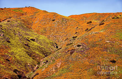 Photograph - California Poppy Hills by Mae Wertz