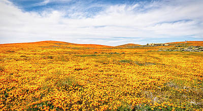 Photograph - California Poppy Superbloom 2019 - Panorama #2 by Gene Parks