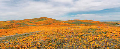 Photograph - California Poppy Superbloom 2019 - Panorama by Gene Parks