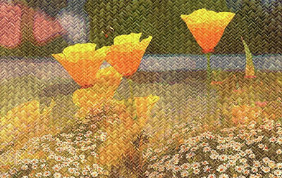 Mixed Media - Californian Poppies On Basket Weave by Clive Littin