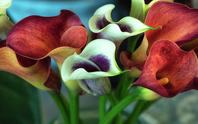 Photograph - Calla Lilies by Jade Moon