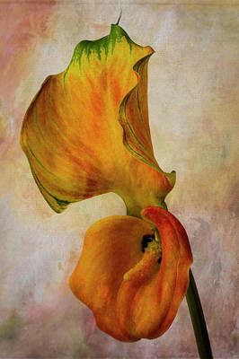 Photograph - Calla Lily And Its Leaf by Garry Gay