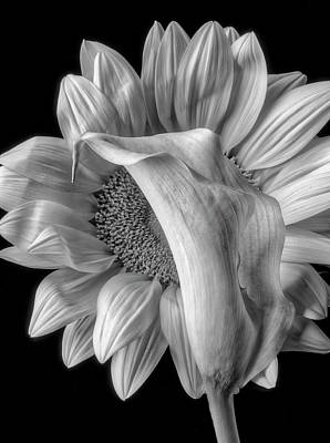 Photograph - Calla Lily And Sunflower In Black And White by Garry Gay